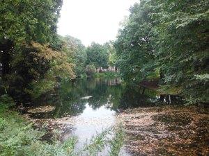 Altwasser in Städten sind idyllische Orte frischen Wassers und alter, anmutiger Bäume. Lebensqualität für die Menschen