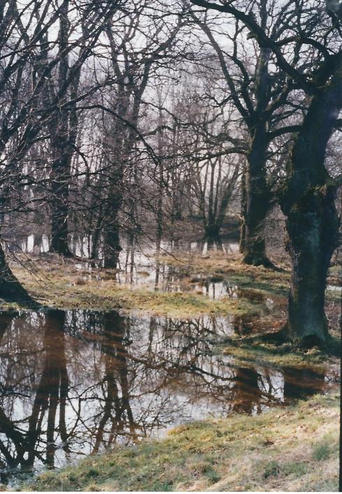 Hochwasser Elbe März 1999 8